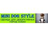 Mini dog style Томск